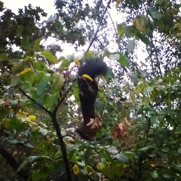 Irres Eichhörnchen in Action.#Eichhörnchen #Kunststueck #Herbst #Tiere #vormeinemFenster