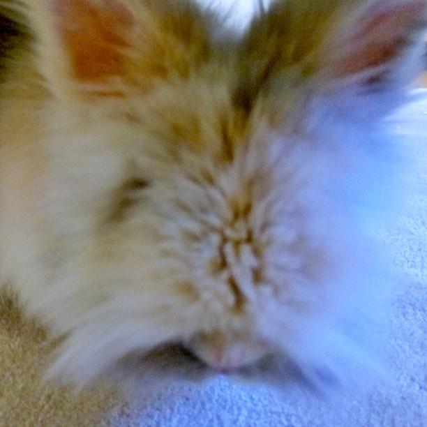 Geburtstagskaninchen. ♥ #Kaninchen #Micky #adopdontshop #cagefree #bunny #rabbit #Geburtstag ?